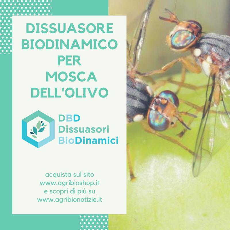 Calendario Trattamenti Olivo Biologico.Dissuasore Biodinamico Per La Mosca Dell Ulivo