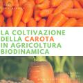 la coltivazione della carota