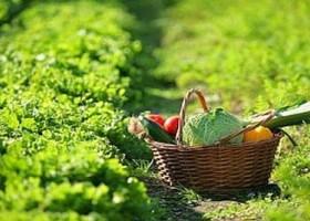 orticoltura-biodinamica